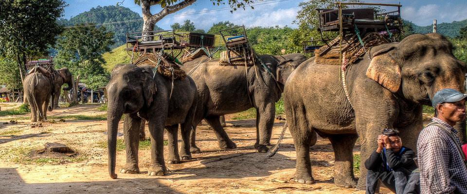 Elephant Camp on Mae Nam Kok